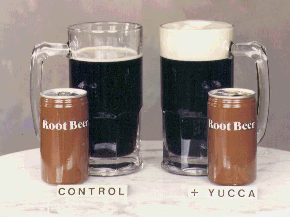 Yucca adds foam to root beer!